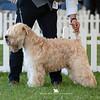 Champion Dog<br /> 1st - Ch Snowmeadow Sauls Symphony To Gavleash