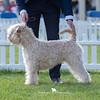 Open Dog<br /> Res - Janeyjimjams Jubilee Juke