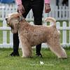 Limit Dog<br /> 2nd - Janeyjimjams Jem Devlin