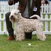 Post Graduate Dog<br /> 1st - Eblanahalls Teckle Ish At Raisingsands