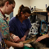 "1 year old Shepherd Doberman mix named ""Lucas"" waits with Pierce College veterinarian students for his operation at Pierce College Woodland Hills Calif. on Friday March 11, 2011. Photo: Jose Romero"