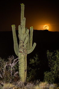 Sabino Canyon Crested with moon rise
