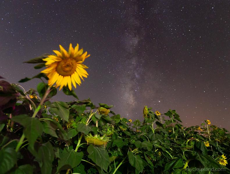 20191017-MaranaSunflowersMilkyWay-088.jpg