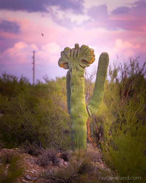 20201107-sunset-and-saguaros--hdr-007.jpg