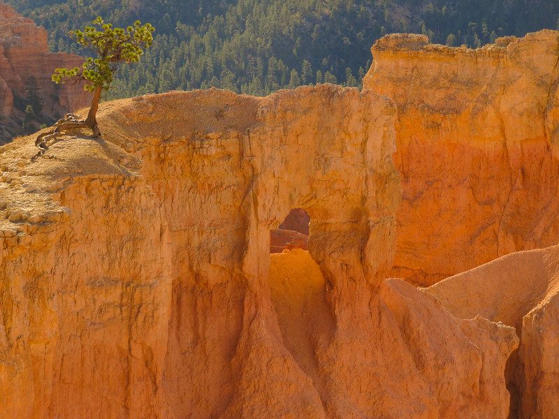 King of the Hill<br /> Bryce Canyon National Park