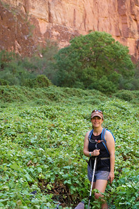 Grape Vines On the Hike to Beaver Falls | Havasupai Indian Reservation, AZ