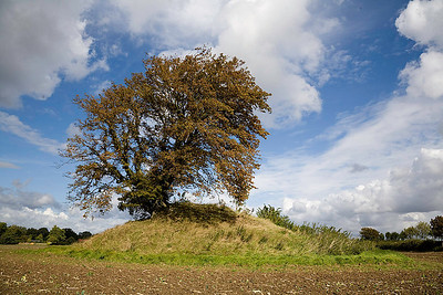 A 4000 year old burial mound with a somewhat younger beech tree perched on the summit.  Mecklenburg Vorpommern/Northern Germany