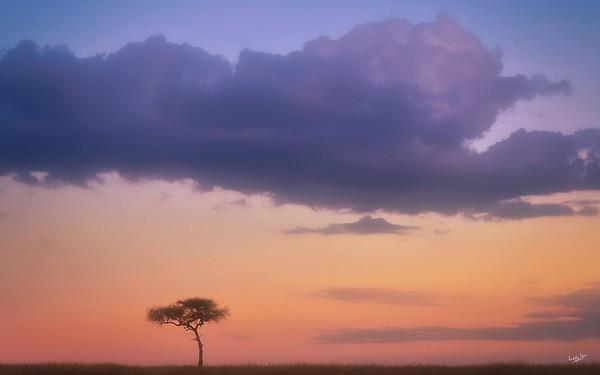 Shepherd's Tree, Maasai Mara