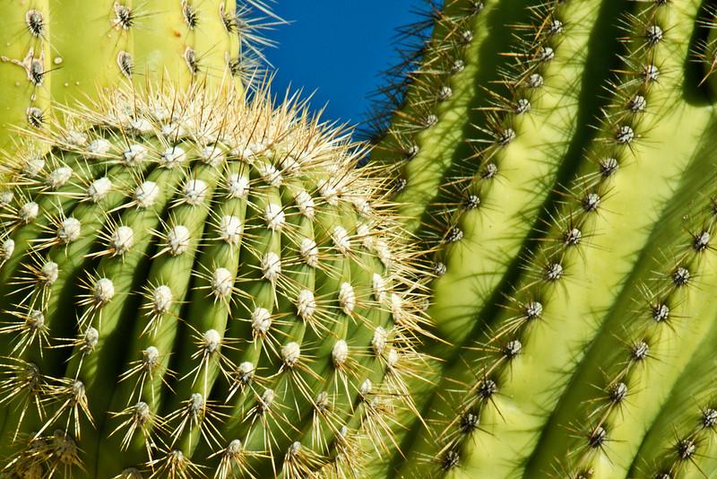 Desert Acupuncture
