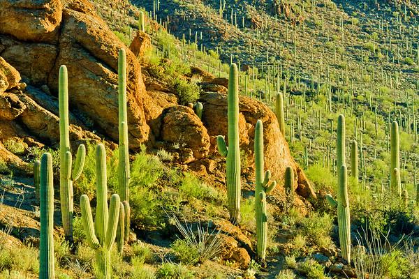 Item# 959-Desert Daybreak