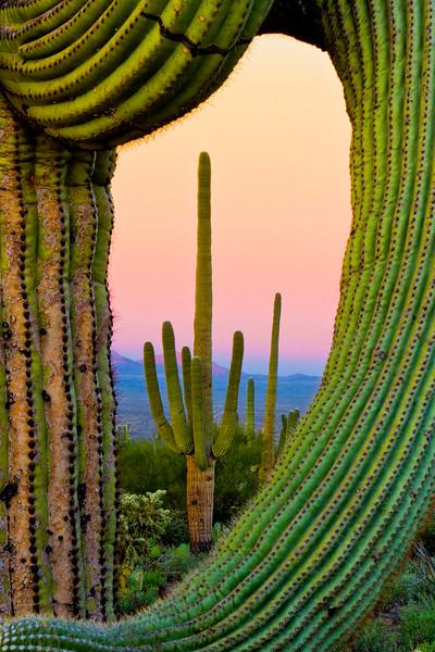 Desert Poetry