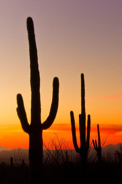 Item# 940-Sonoran Sunset