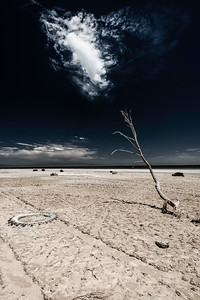 Hope on the Salton Sea