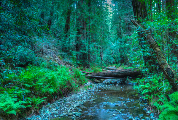 A Walk in Muir Woods