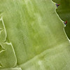 There's lots to photograph on a yucca plant.