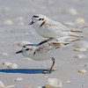 Plover Lovers