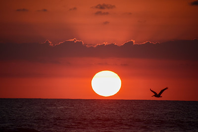 Magical Sunset with Pelicans in the air in Costa Rica