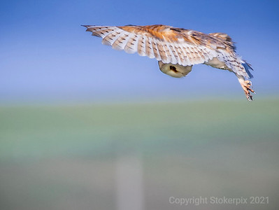 """Barn Owl - """"Don't Look Up"""""""
