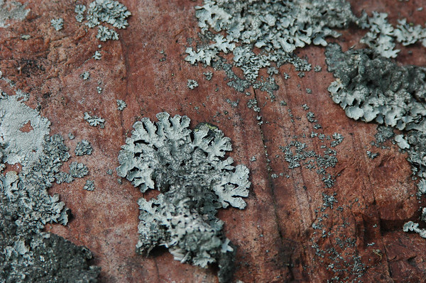 Lichen on granite