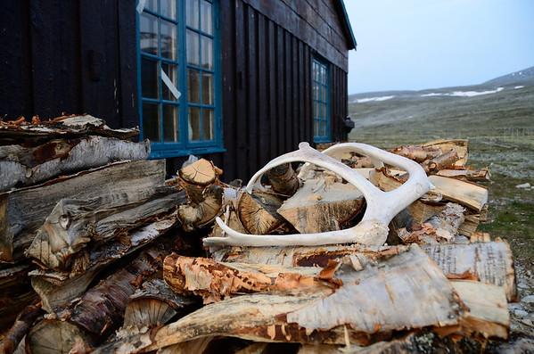Birch fire wood, Reindeer antlers
