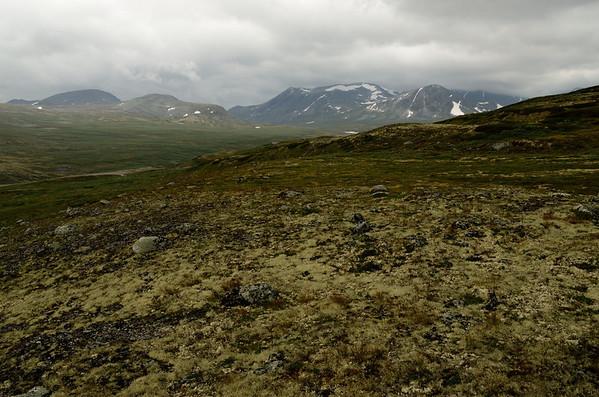Dovrefjell tundra