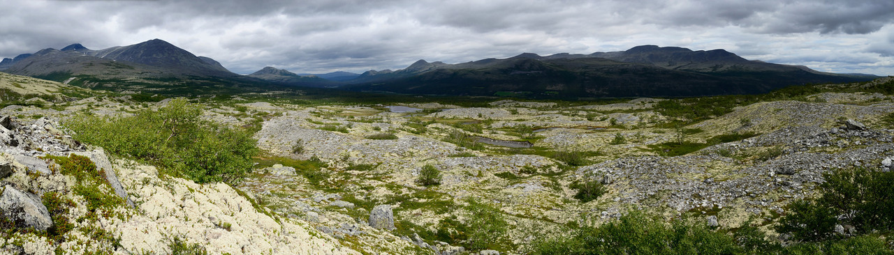 Rondane's east slopes: Pine trees, lichen carpets