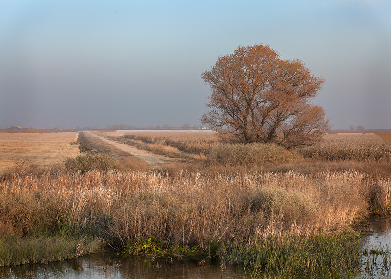 Merced NWR, San Joaquin valley, California