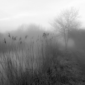 Mist on the Canal