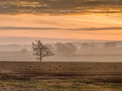 Mellow Dawn