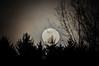 "<div class=""jaDesc""> <h4> Full Moon Rising #1 - March 24, 2016</h4> <p></p> </div>"
