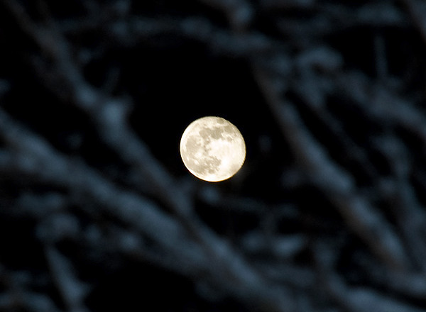 """<div class=""""jaDesc""""> <h4>Rising Moon - December 13, 2008 </h4> <p>A very bright almost-full moon was rising in the east, visible through the snowy branches of a maple tree.</p> </div>"""