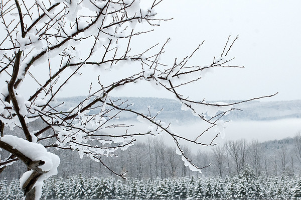 """<div class=""""jaDesc""""> <h4> Winter View from Our Kitchen - November 25, 2008 </h4> <p>When we built our house, we made sure this view to the west would be what we saw from our kitchen window. </p> </div>"""