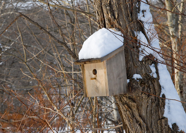 """<div class=""""jaDesc""""> <h4> Snow-covered Wren Nest Box - December 31, 2012 </h4> <p> In another 4 months, wrens will find this nest box.  Right now it has been adorned by our first snow storm.</p> </div>"""
