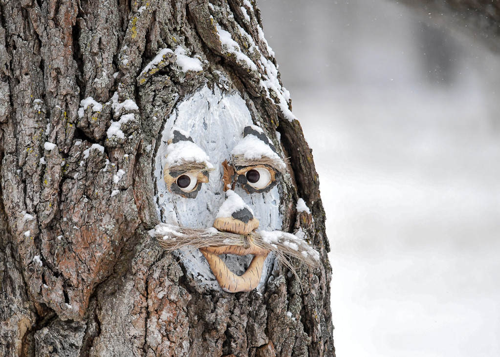 """<div class=""""jaDesc""""> <h4> Face on a Snowy Tree - December 30, 2017</h4> <p>This creative face was in the limb hole of a tree in a front yard in Nichols, NY.</p> </div>"""