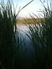 Westchester Lagoon