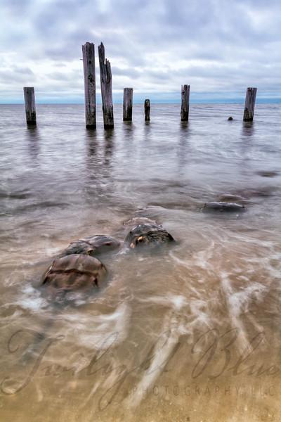 3  Horshoe Crab Scene 2