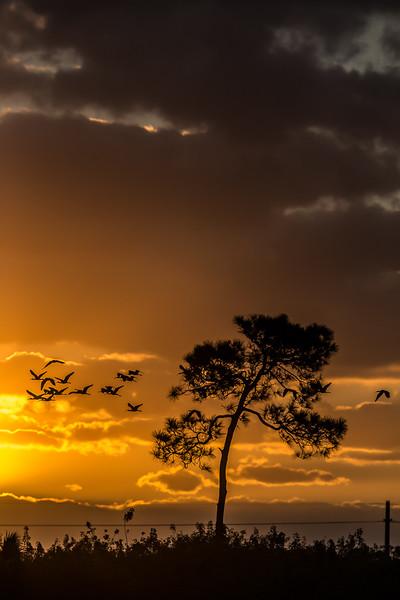 Vierra Sunrise