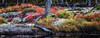 Morse Pond Color