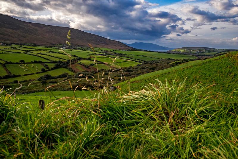 Kerry Pastureland 2
