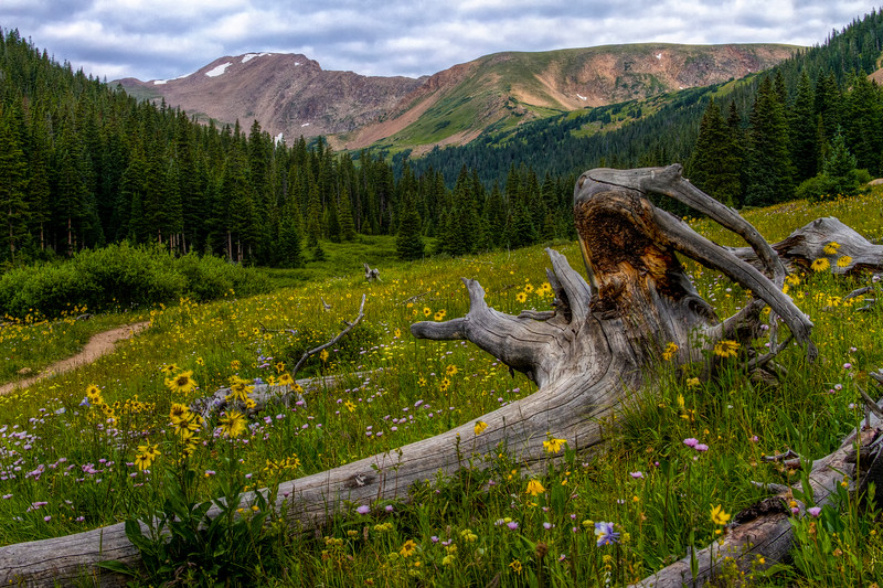 Herman Gulch Meadow 1