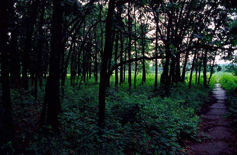Path 5