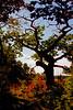 Bates Tree