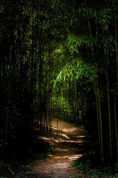 Bamboo Walk 1
