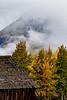 CB Autumn Fog