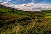 Kerry Pastureland 1
