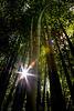 Bamboo Walk 2