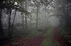 Fog in Forrest MD 4