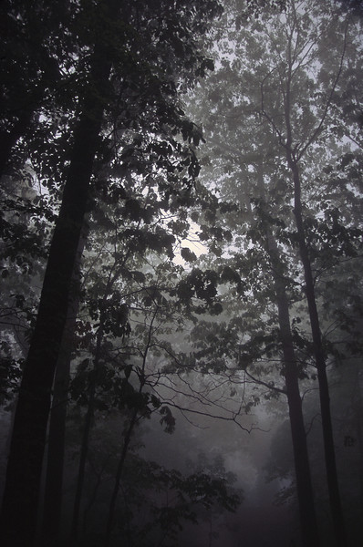 Fog in Forrest MD 2