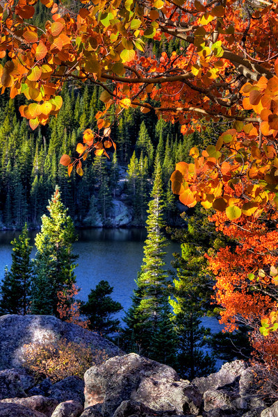 Bear Lake Aspens & Pines (r)