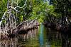 Everglades Mangrove 1